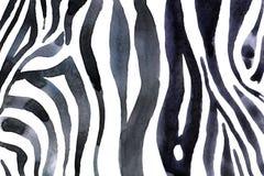 Предпосылка акварели животная с печатью бело-черной зебры стоковые изображения