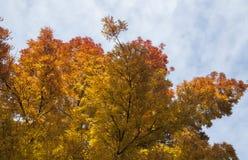 Предпосылка апельсина природы осени красочная, желтых и красных Стоковое Фото