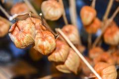 Предпосылка апельсина фонарика phyllis сухих ветвей китайская Стоковая Фотография RF