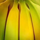 Предпосылка банана Стоковое Изображение RF