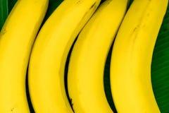 Предпосылка 4 бананов помещенных на свежих зеленых листьях банана Стоковые Фотографии RF