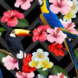 Предпосылка безшовного лета тропическая с тропическими цветками и красочными попугаями также вектор иллюстрации притяжки corel иллюстрация штока