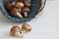 Предпосылка белизны champignons Брайна Стоковые Фотографии RF