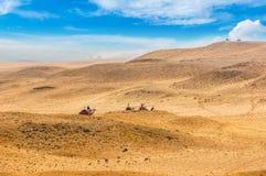 предпосылка больше моего перемещения портфолио Верблюды в пустыне Стоковые Изображения RF