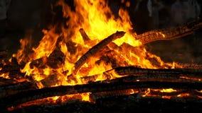 Предпосылка большого лагерного костера от ожога ветвей на ноче в замедленном движении леса акции видеоматериалы