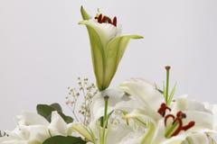 Предпосылка букета цветка Лилия Стоковое Изображение RF