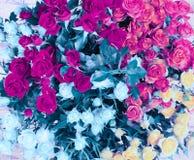 Предпосылка букета цветка Розовая маджента и голубые розы стоковые изображения rf