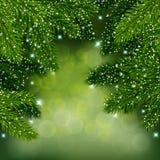 Предпосылка вектора зимы с вечнозелеными ветвями Элегантный шаблон карточки Стоковые Фото