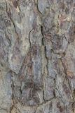 Предпосылка вертикали текстуры коры дерева Стоковые Фотографии RF