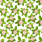 Предпосылка весны безшовная с яблоком цветет на белизне Стоковые Фото