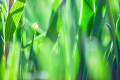 Предпосылка весны или природы лета абстрактная с травой в лужке и голубым небом в задней части Стоковые Изображения RF