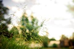 Предпосылка весны или природы лета абстрактная с травой в лужке и голубым небом в задней части Стоковое Фото