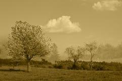 Предпосылка весны и красивый луг в коричневых тонах Стоковые Фото