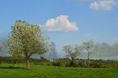 Предпосылка весны и красивый луг Стоковая Фотография