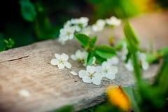 Предпосылка весны с белыми вишневыми цветами и деревенским деревянным столом для украшения пасхи стоковое фото rf