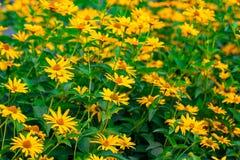 Предпосылка весны с красивыми желтыми цветками на зеленом backgro Стоковые Фото