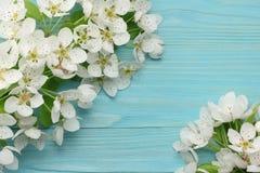 Предпосылка весны с цветениями белых цветков на голубой деревянной предпосылке Взгляд сверху стоковое изображение rf