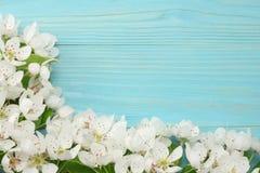 Предпосылка весны с цветениями белых цветков на голубой деревянной предпосылке Взгляд сверху стоковое изображение