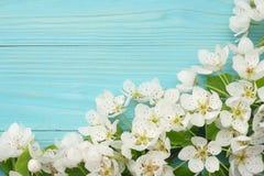 Предпосылка весны с цветениями белых цветков на голубой деревянной предпосылке Взгляд сверху стоковые фотографии rf