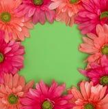 Предпосылка весны флористическая с ориентированным на заказчика космосом в зеленом цвете Стоковое Фото