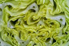 Предпосылка витаминов макроса veggie салата Vegetable стоковое фото rf