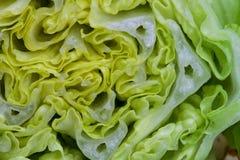 Предпосылка витаминов макроса veggie салата Vegetable стоковая фотография rf