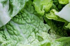 Предпосылка витаминов макроса veggie салата Vegetable стоковые фото