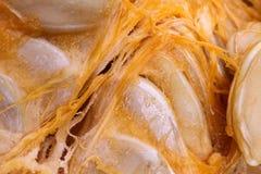 Предпосылка витаминов макроса veggie тыквы Vegetable стоковая фотография rf