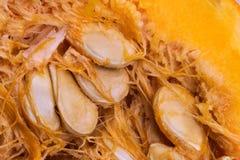 Предпосылка витаминов макроса veggie тыквы Vegetable стоковое изображение