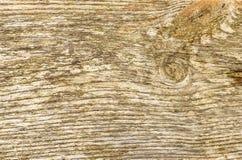 предпосылка всходит на борт деревянного Стоковые Фото