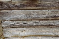 предпосылка всходит на борт деревянного стоковые изображения rf