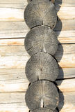 предпосылка всходит на борт деревянного Стоковые Фотографии RF