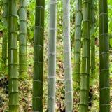 Предпосылка в бамбуке Стоковое Изображение