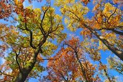 Предпосылка в октябре леса природы стоковые фото