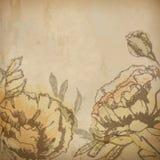 Предпосылка год сбора винограда флористическая с рисовать цветков Стоковое Изображение RF