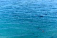Предпосылка голубой поверхности океана стоковое изображение rf