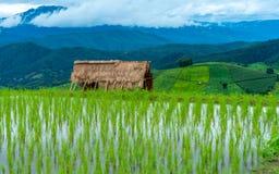Предпосылка горы поля риса коттеджа стоковое фото