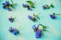 Предпосылка границы весны с белым цветением стоковые фотографии rf