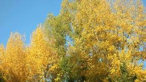 Предпосылка движения деревьев осени сток-видео
