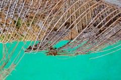 Предпосылка дерева волокна Брауна стоковые фотографии rf