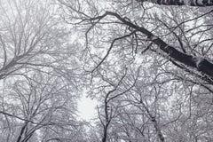 Предпосылка дерева зимы Деревья зимы замерли лесом, который Стоковые Фотографии RF