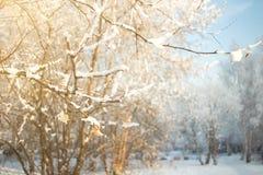 Предпосылка дерева зимы солнечная Ветви покрыли снег Сезонно концепция предпосылки зимы Christmass стоковая фотография