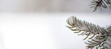 Предпосылка дерева зимы Стоковые Фотографии RF