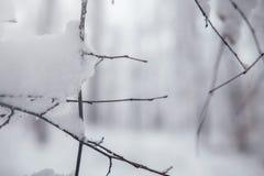 Предпосылка дерева зимы Стоковое Изображение