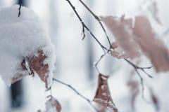 Предпосылка дерева зимы Стоковые Изображения RF