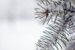 Предпосылка дерева зимы Стоковая Фотография RF