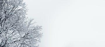 Предпосылка дерева зимы Стоковое Изображение RF