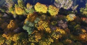 Предпосылка деревьев осени в солнечной погоде и теней на пруде сток-видео
