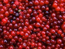 Предпосылка деревянного щавеля ягоды Стоковая Фотография RF