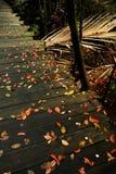Предпосылка Дзэн - цвета осени Стоковые Изображения